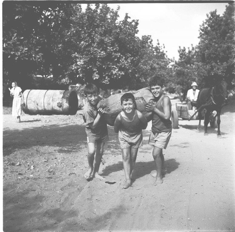 ילדי משמר השרון עובדים בחקלאות 1953