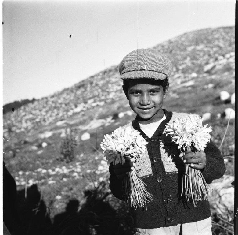 ילד מוכר רקפות מסילת ציון 1956