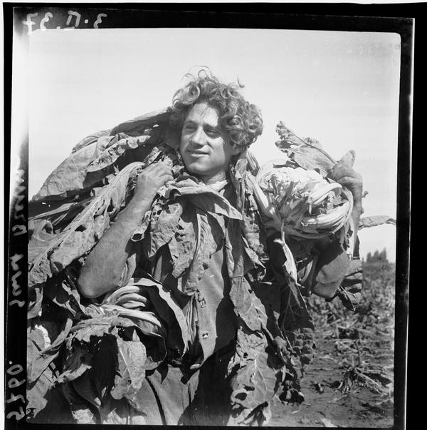 1310658 חבר קיבוץ גבעת ברנר, 1937