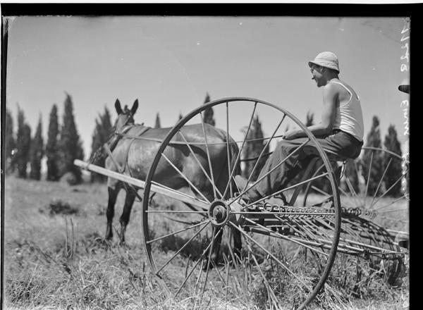 1344470 חבר קיבוץ עמק חפר יושב על מחרשה רתומה לסוס, 1939